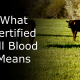 Certified Wagyu